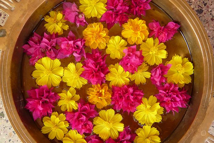 vedische astrologie ausbildung